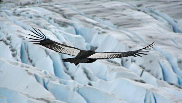 Condor des Andes - Sputnik France
