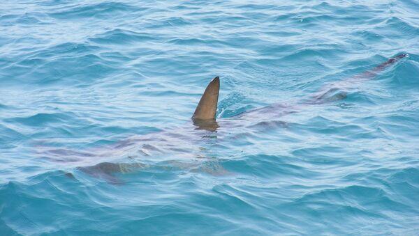 Aileron de requin - Sputnik France