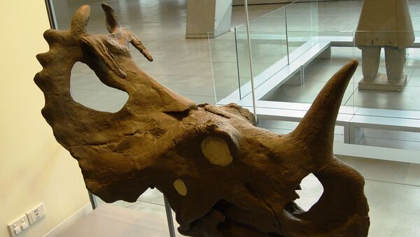 Le crâne d'un centrosaurus  - Sputnik France