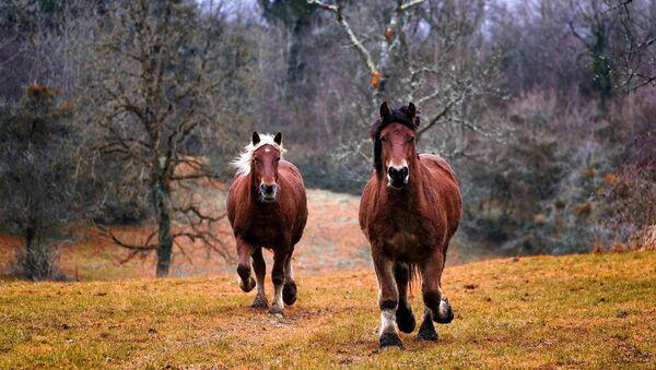 Des chevaux - Sputnik France