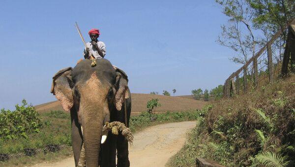 Éléphant d'Asie - Sputnik France