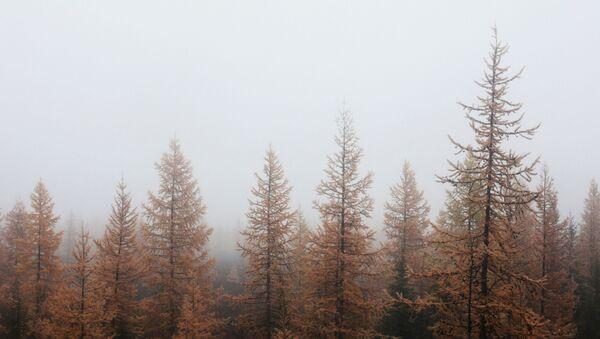Nature du district autonome de Iamalo-Nénétsie, en Sibérie - Sputnik France