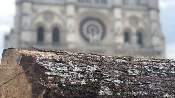 La charpente de Notre-Dame-de-Paris sera reconstruite à l'identique, en chêne - Sputnik France