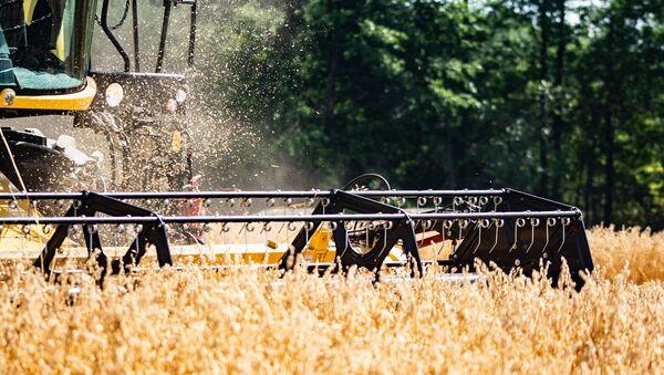 Des travaux agricoles - Sputnik France