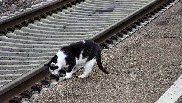 Un chat à la gare - Sputnik France