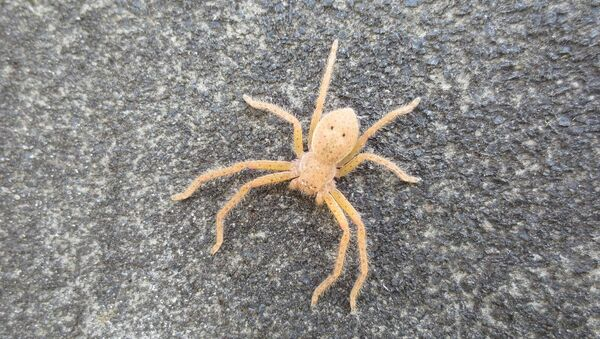 araignée, image d'illustration - Sputnik France