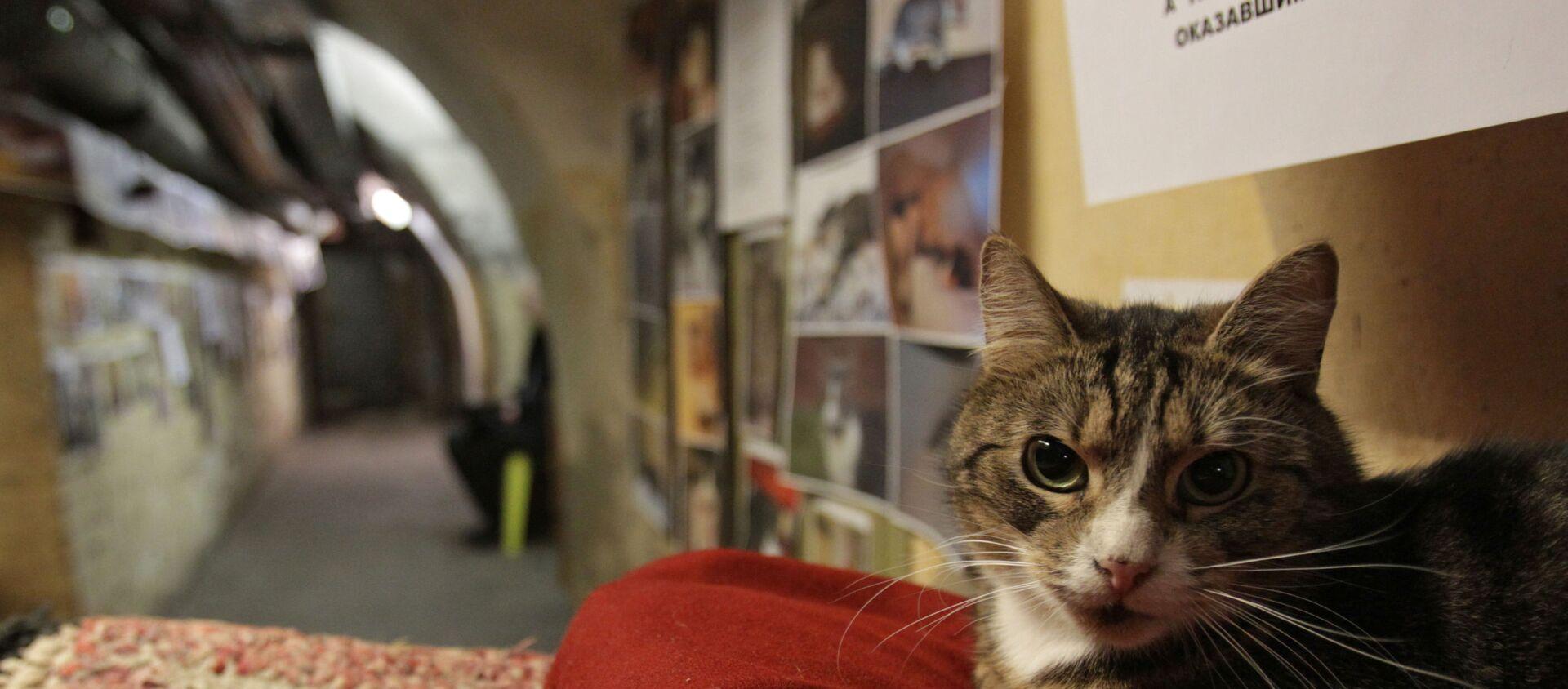 Un chat de l'Ermitage - Sputnik France, 1920, 02.12.2020