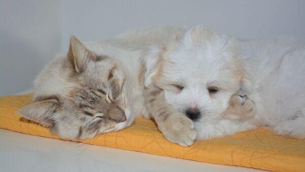 Un chien et un chat - Sputnik France