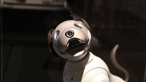 Un chien robot (image d'illustration) - Sputnik France