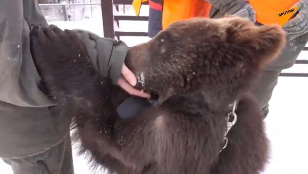 Amitié rare: retrouvez l'histoire de la rencontre du chien Romi et de l'oursonne Andreïka - Sputnik France