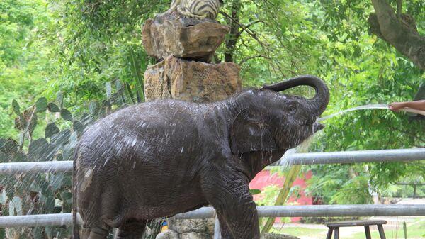 Un éléphanteau  - Sputnik France