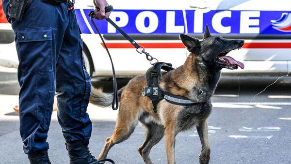 Un chien des policiers, image d'illustration - Sputnik France