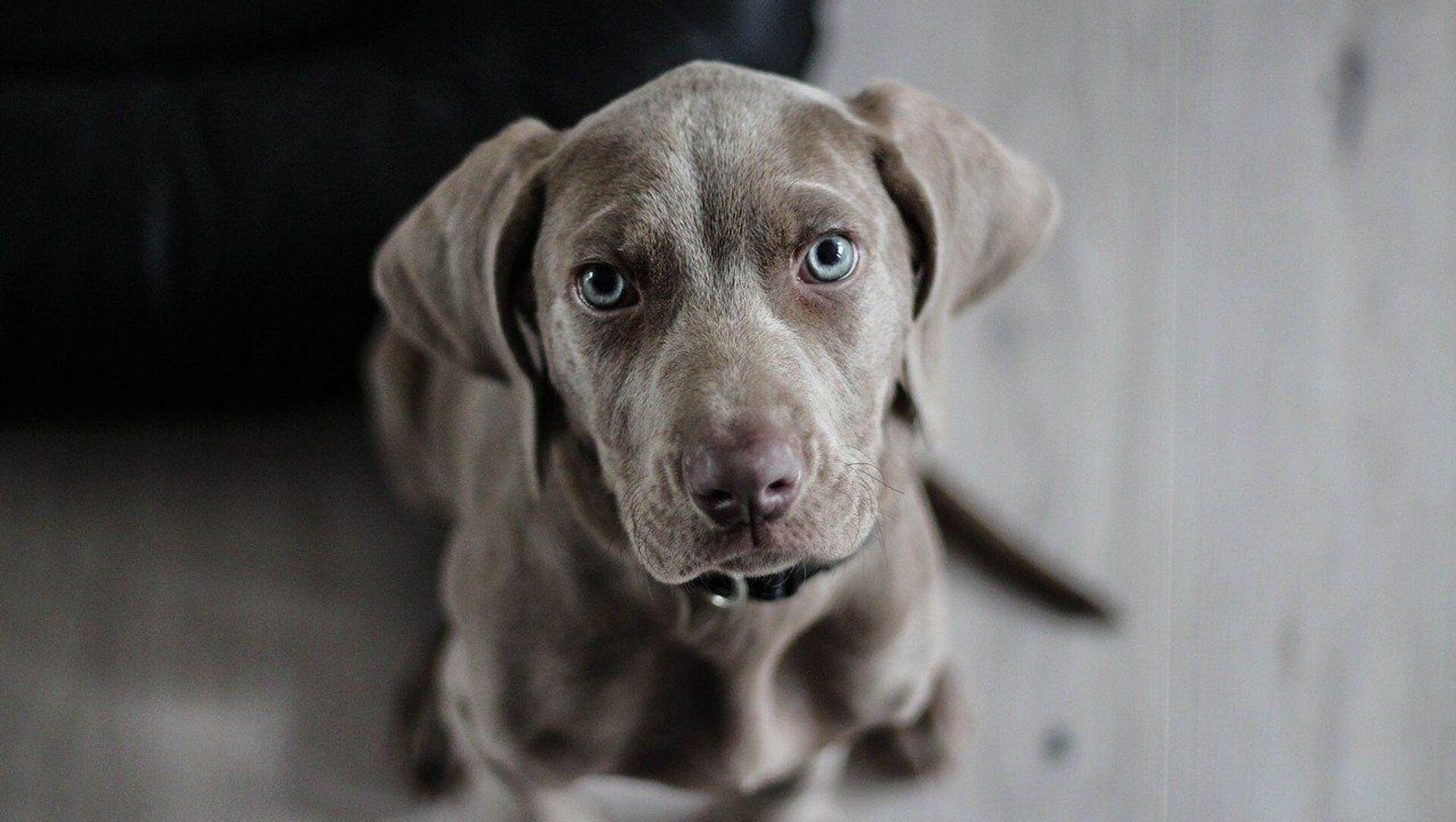 Un chien - Sputnik France, 1920, 16.08.2021