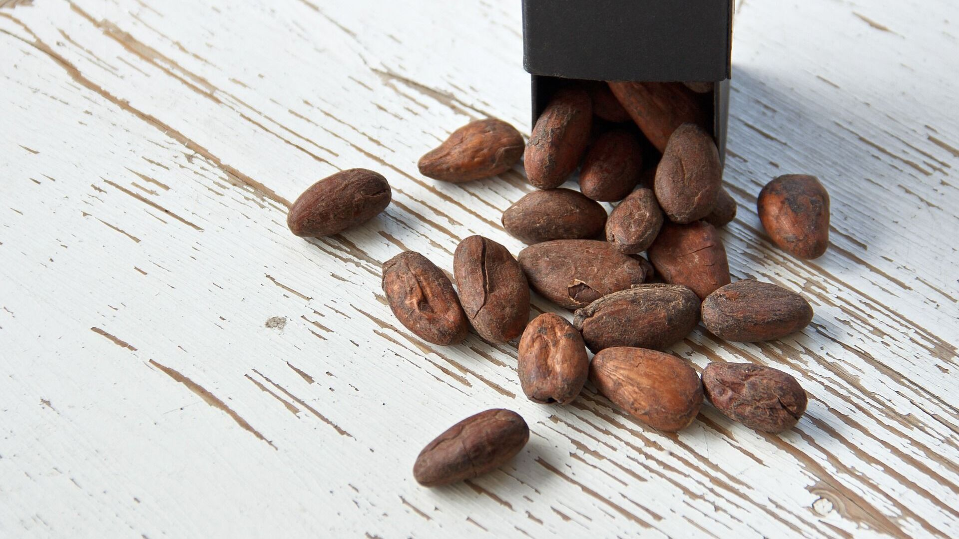 Des fèves de cacao - Sputnik France, 1920, 16.02.2021