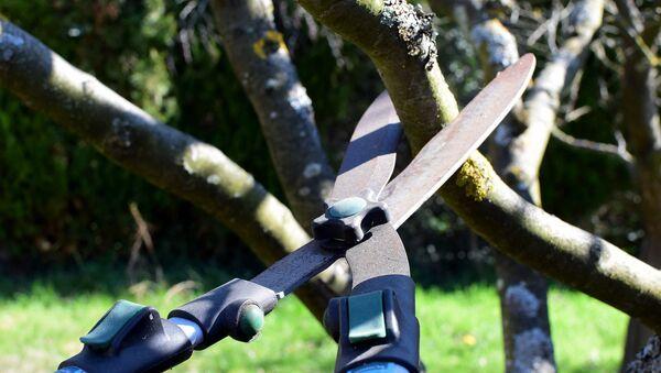 Taille d'arbres - Sputnik France