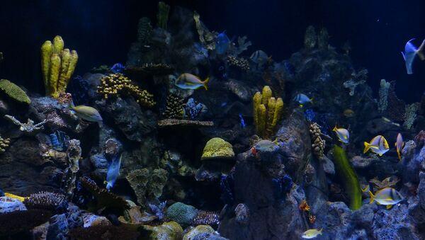Des coraux - Sputnik France
