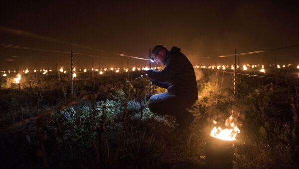 Un vigneron français tente de contenir le froid qui s'abat sur ses vignes avec des braseros, près de Nantes, avril 202 - Sputnik France