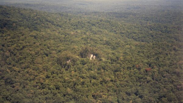 Forêt tropicale, Nouvelle-Guinée - Sputnik France