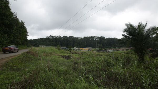 La forêt d'Akanda, le Gabon - Sputnik France
