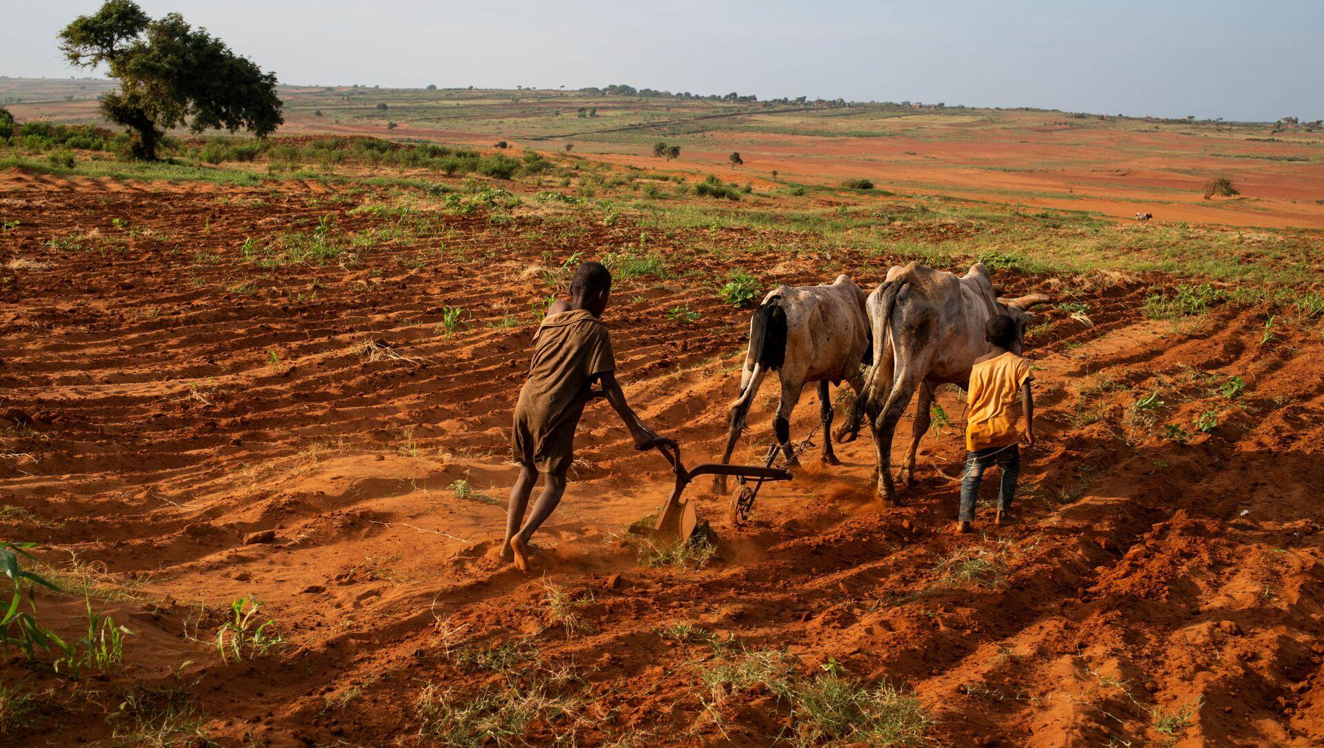 Des enfants tentent de labourer une plantation dans le Grand Sud de Betsimeda, Madagascar - Sputnik France, 1920, 30.06.2021