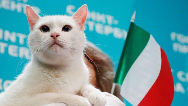 Ces animaux qui font des pronostics sur l'Euro 2020   - Sputnik France