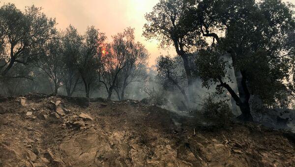 Feux de forêt en Algérie, le 10 août 2021 - Sputnik France