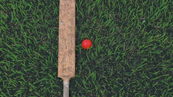 Cricket, image d'illustration - Sputnik France