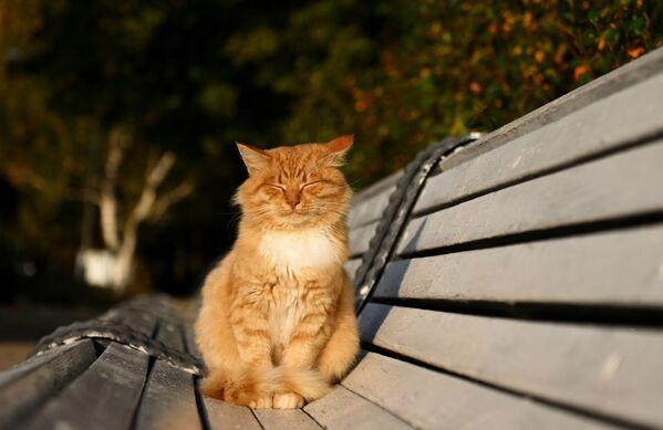 Au cours de la deuxième moitié d'octobre, le temps commencera à changer et un cyclone provoquera des nuages, des précipitations et la baisse des températures.Sur la photo: un chat se prélassant au soleil sur un banc près du couvent de Novodievitchi, à Moscou. - Sputnik France