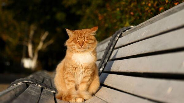 Кот вблизи Новодевичьего монастыря в Москве - Sputnik France