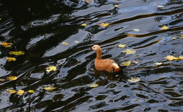 Un étang dans le parc Krasnaïa Presnia, à Moscou. - Sputnik France