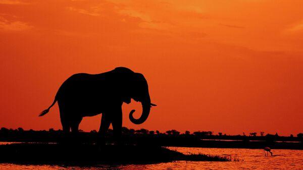 Un éléphant - Sputnik France