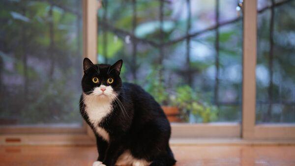 Un chat à la fenêtre - Sputnik France