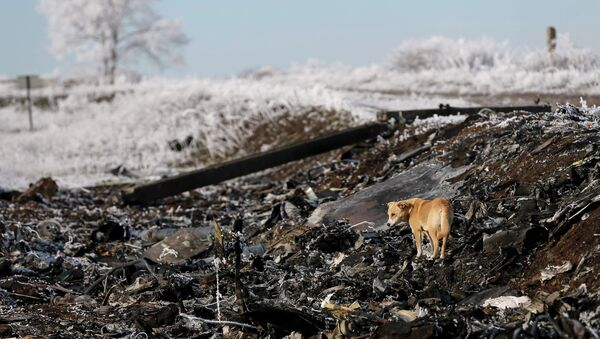 A dog stands at the site where MH17, a Malaysia Airlines Boeing 777 plane, crashed near the village of Hrabove (Grabovo) in Donetsk region - Sputnik France