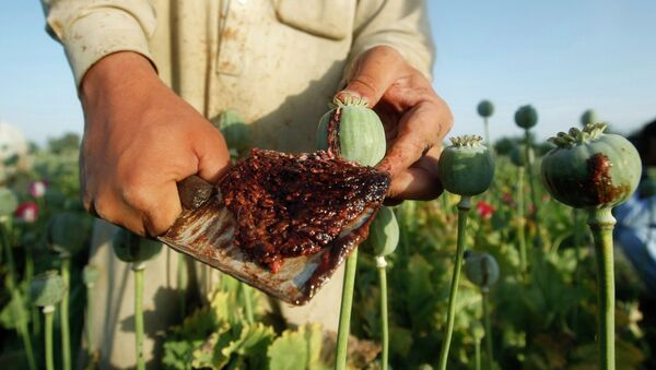 An Afghan man works on a poppy field in Jalalabad province in this May 1, 2014 file photo. - Sputnik France