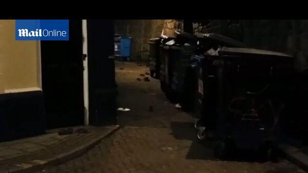 Newcastle envahie par les rats géants - Sputnik France