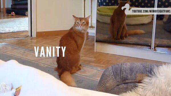 Rien de plus terrifiant qu'un chat - Sputnik France