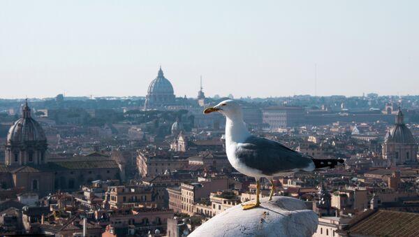 Чайка на крыше дома в Риме 5 апреля 2014 - Sputnik France