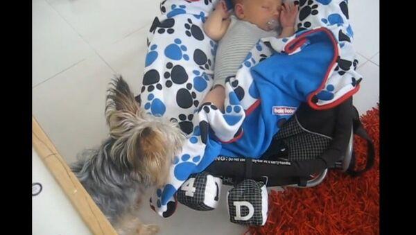 Un chien joue les baby-sitters - Sputnik France
