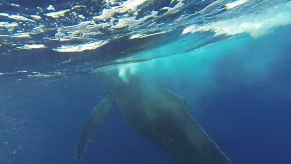 Quand une baleine passe tout près - Sputnik France