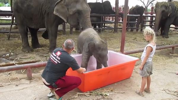 Un éléphanteau prend son bain - Sputnik France