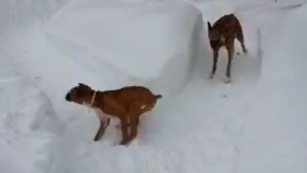 Un vieux chien s'amuse avec son fiston - Sputnik France