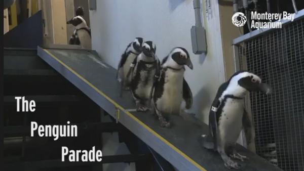 Parade de pingouins - Sputnik France