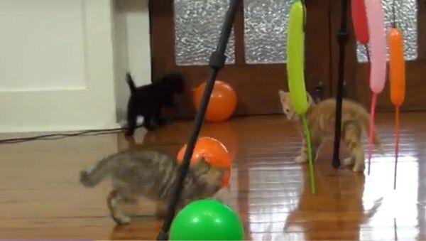 Des chats s'amusent avec des ballons - Sputnik France