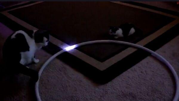 Des chatons impressionnés par un cerceau lumineux - Sputnik France