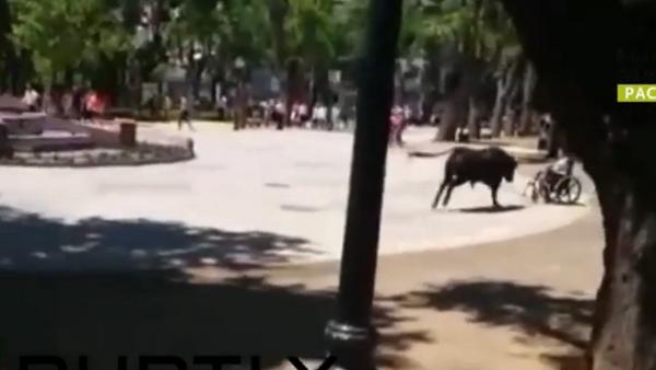 Espagne: un taureau déchaîné fait 11 blessés - Sputnik France