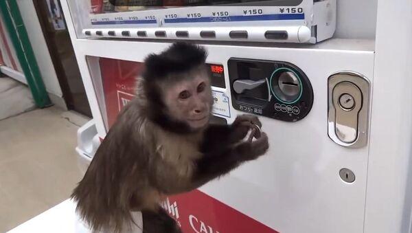 Un singe s'achète à boire - Sputnik France