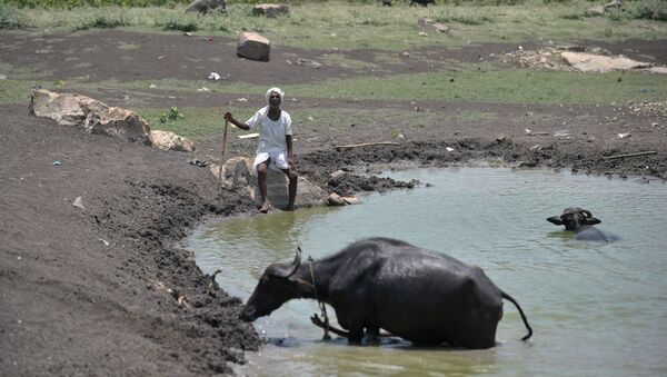 An Indian man sits under the hot sun next to his cattle on the outskirts of Hyderabad on May 25, 2015 - Sputnik France