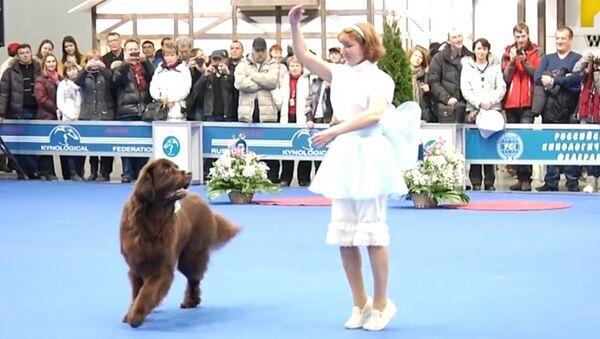 Un chien, la vraie star de la danse! - Sputnik France