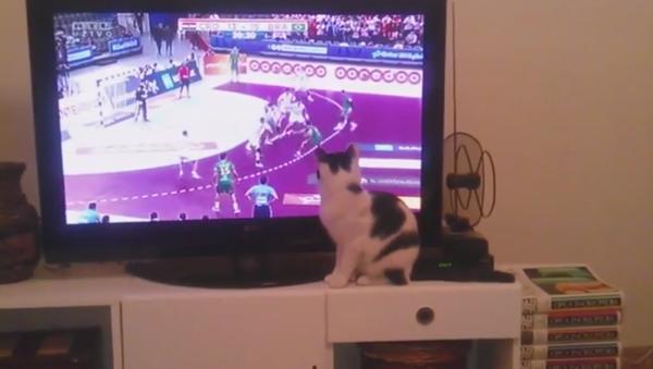Un chat passionné du foot - Sputnik France