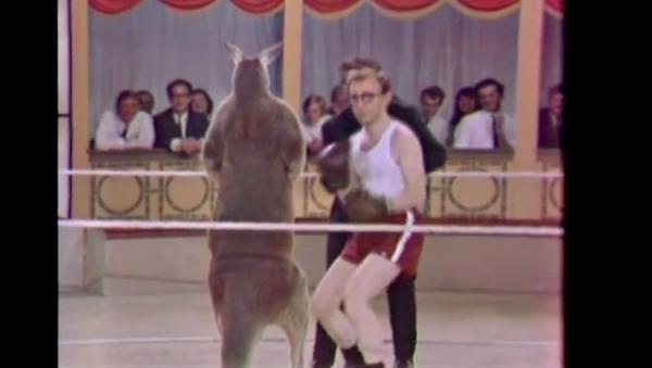 Woody Allen vs un kangourou - Sputnik France